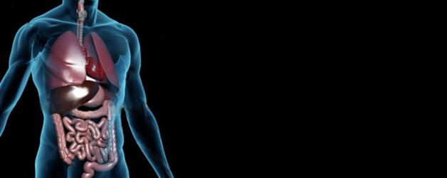 Terapia Nutricional na Síndrome Metabólica